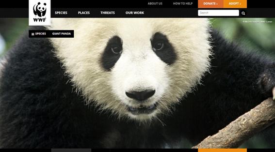 WWF Donations