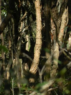 Can you spot the Kangaroo?