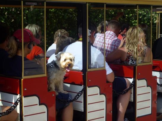 Monaco tourist train