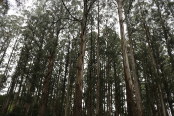 The Dandenongs