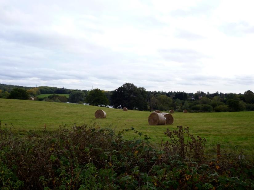 CountrysideVibe